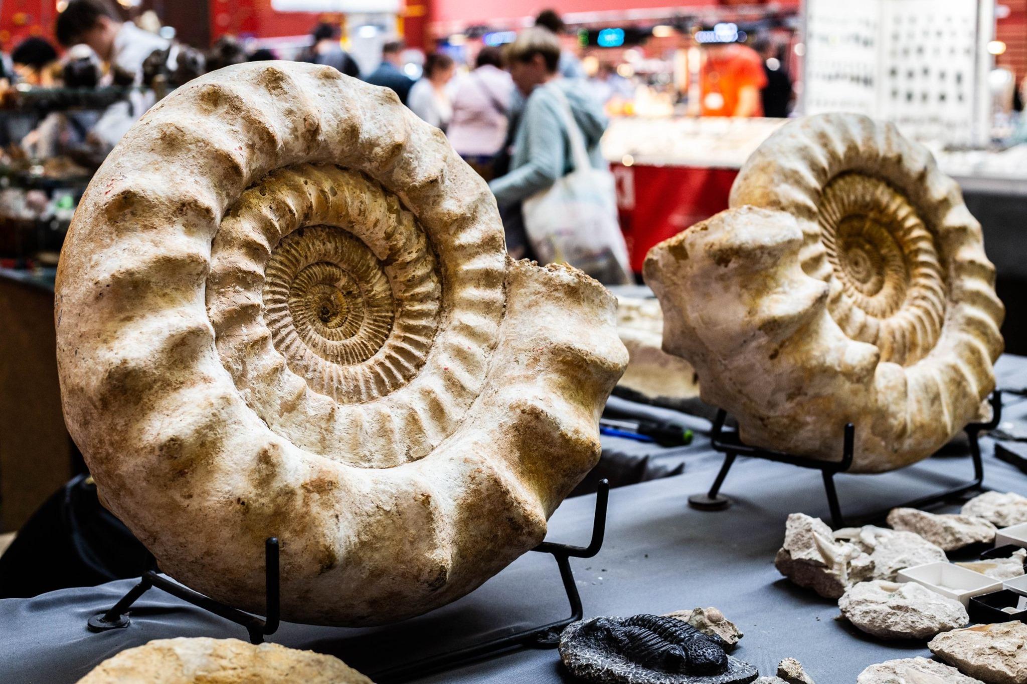 skamieniałości na wystawie Geoexpo