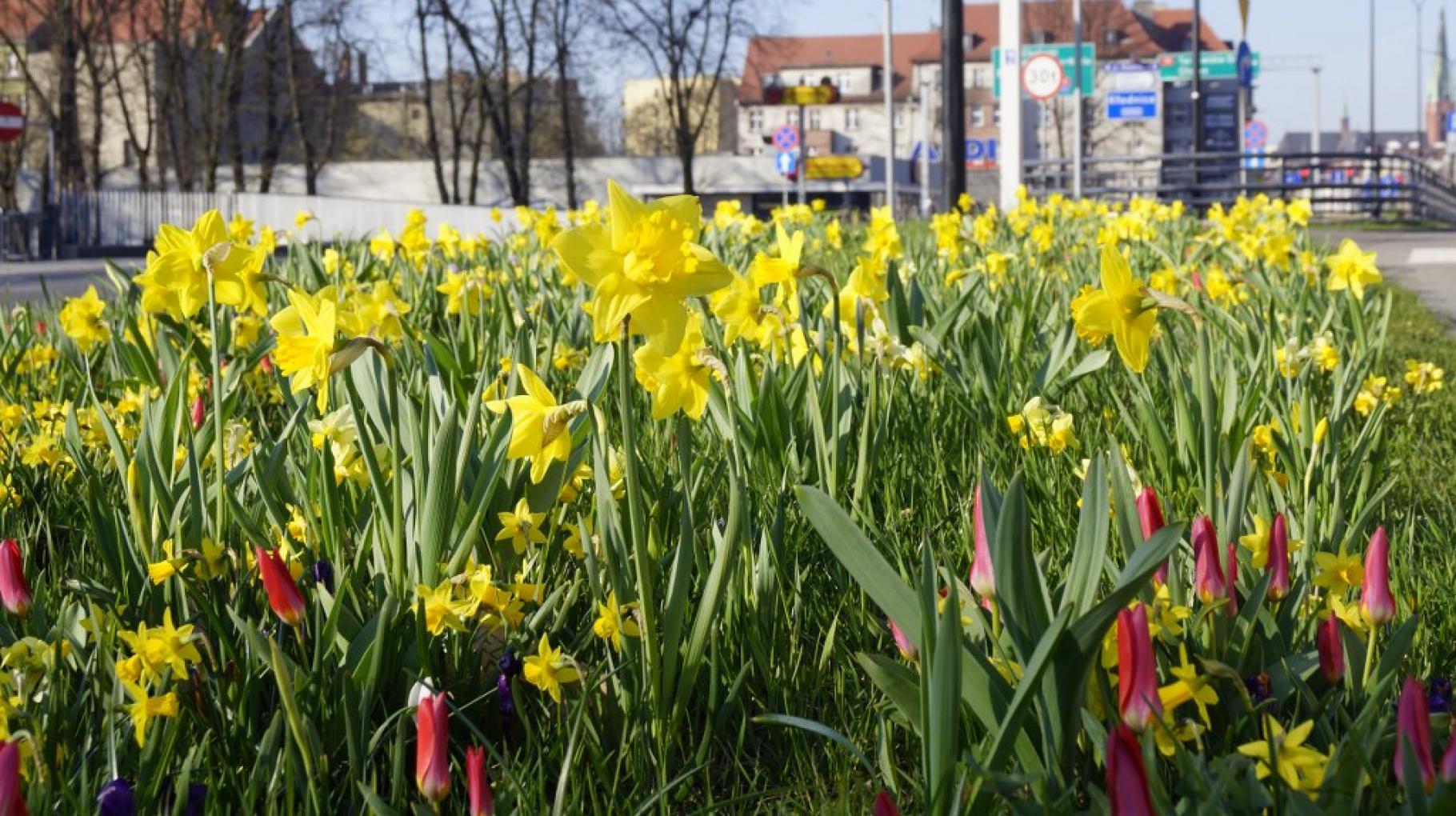 Kwiaty przy ul. Dworcowej