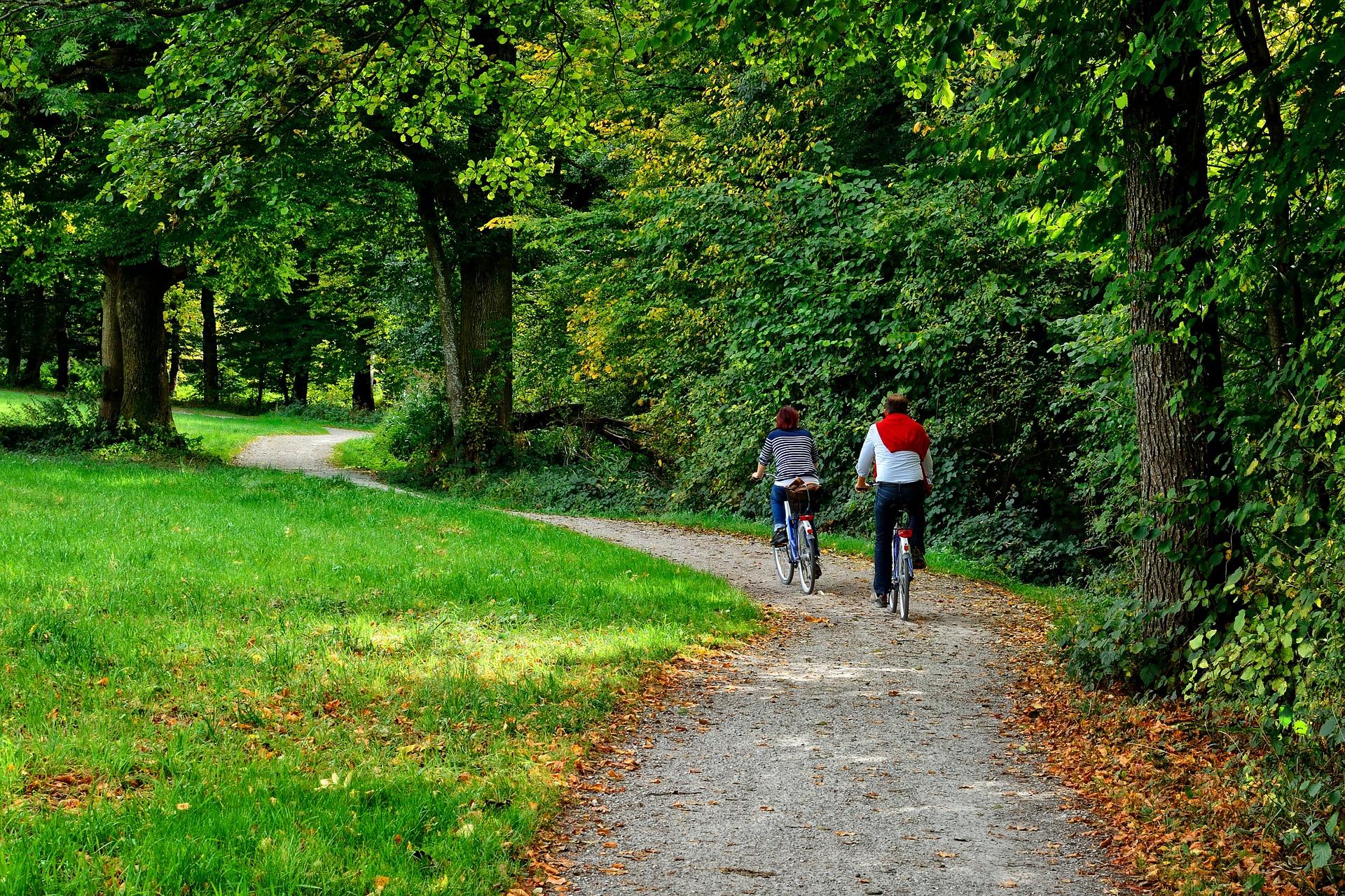 rowerzyści wjeżdżają do lasu