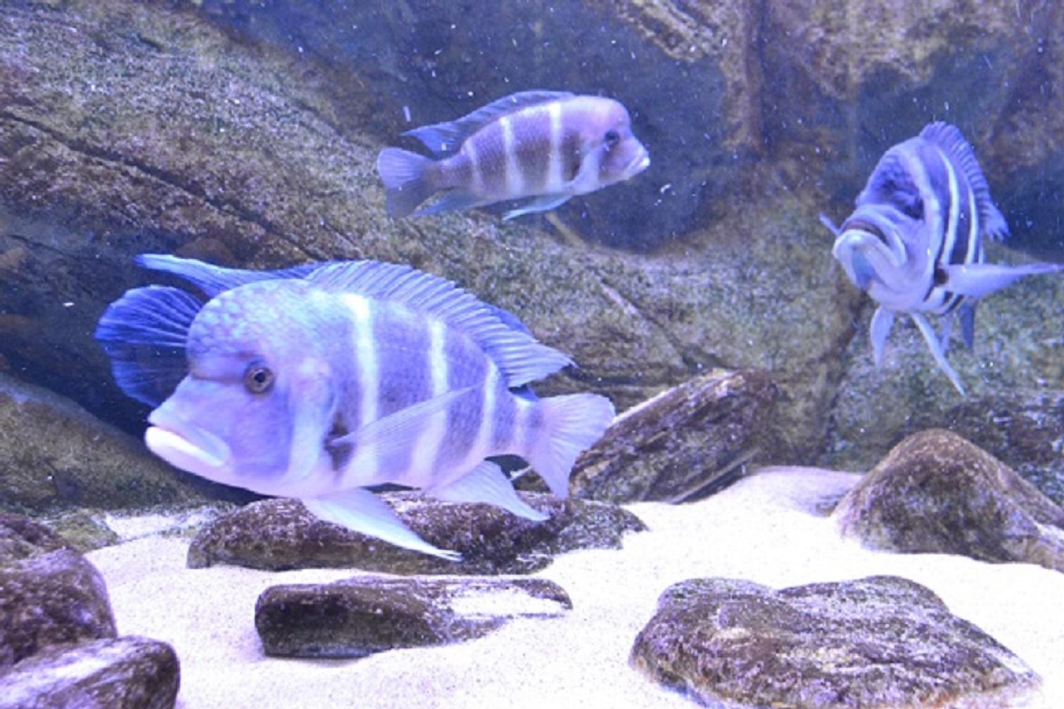 Pyszczaki - nowe ryby w Palmiarni