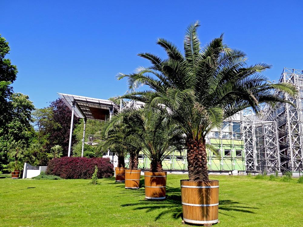 Palmy przed Palmiarnią