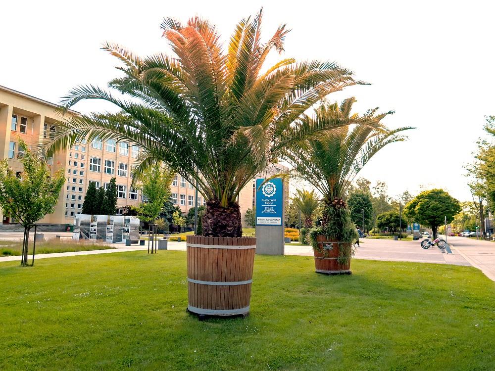 palmy przy ul. Akademickiej
