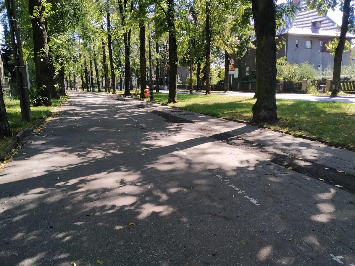 aleja lip przy ul. Mickiewicza
