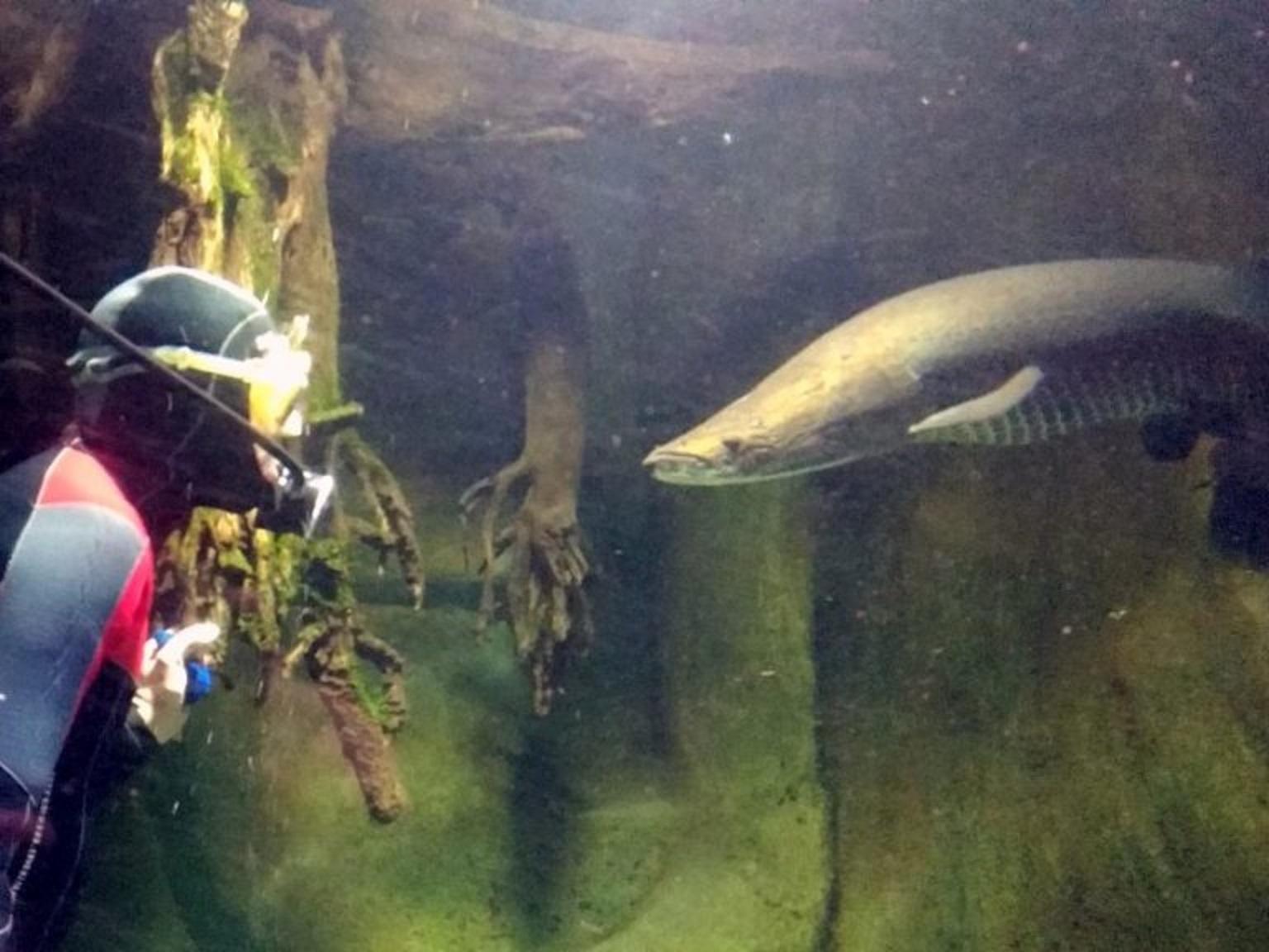 ryba i nurek naprzeciw siebie