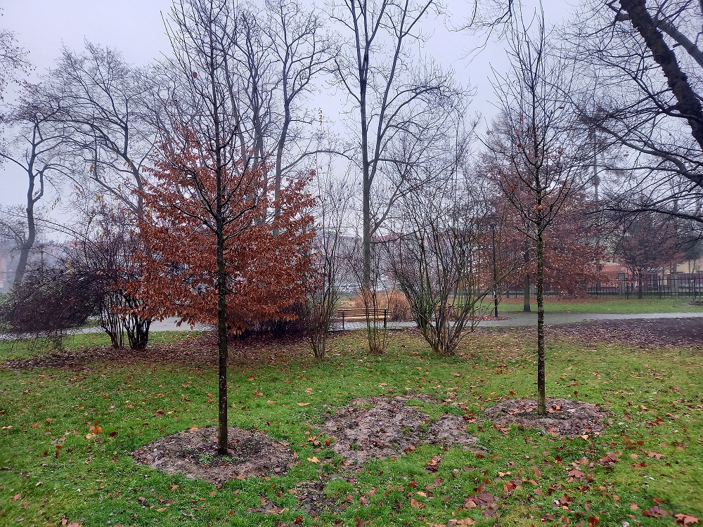 Nowe nasadzenia w parku Chopina