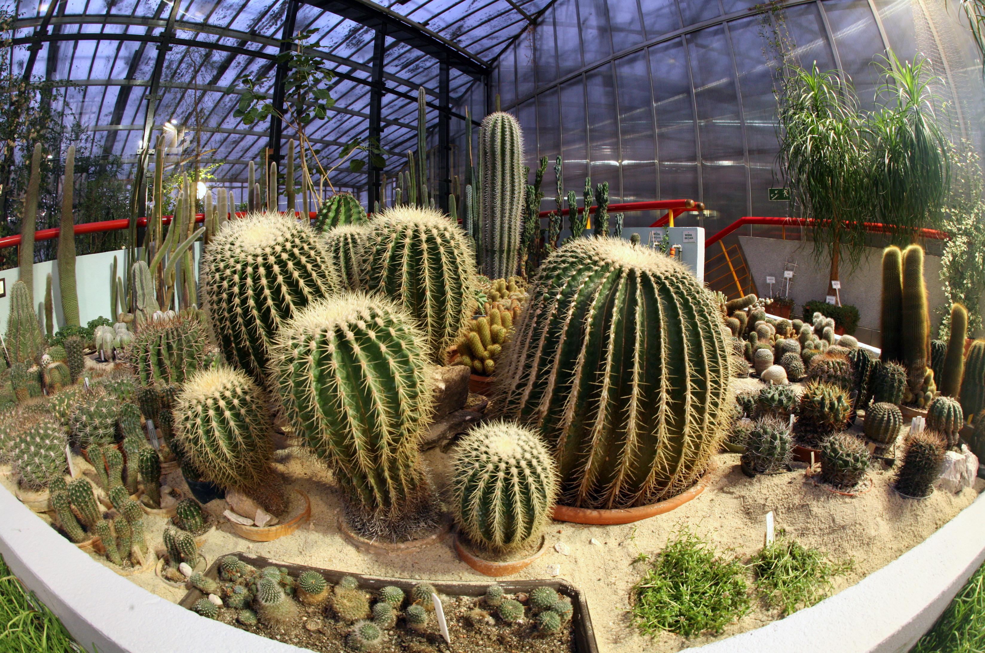 kaktusy w Palmiarni