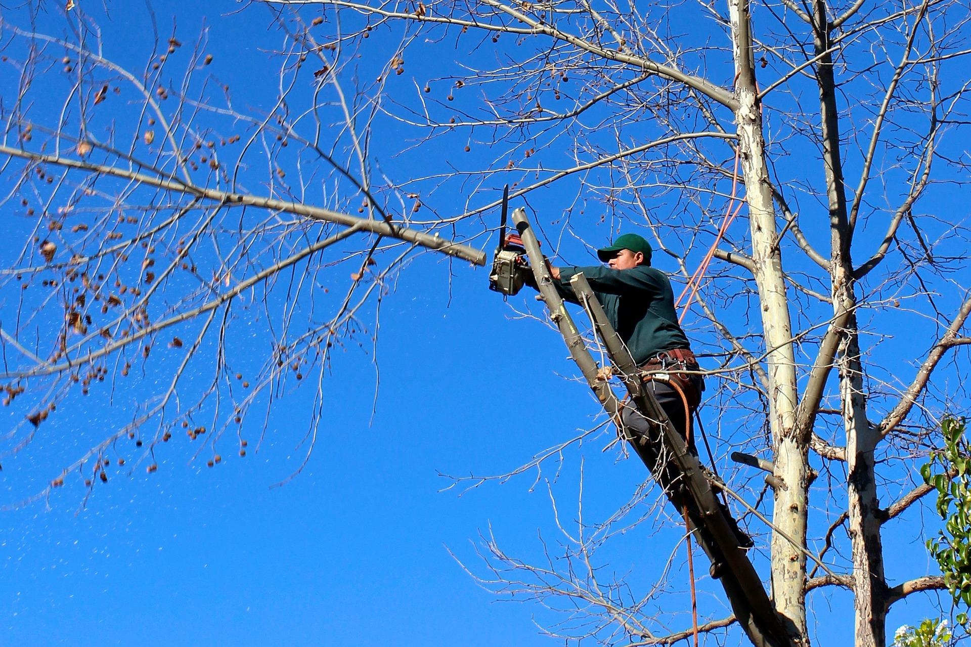Człowiek na drzewie