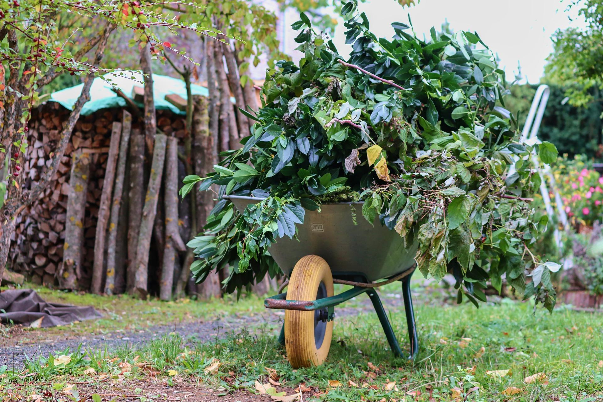 taczka w ogrodzie wypełniona gałęziami